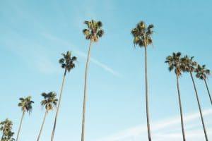 Palmiers - Vivre à Valencia